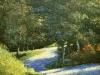 houglum-curve-on-iotla-road